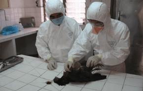 Se descubre una vacuna efectiva en contra del virus H5N1 de la gripe aviaria
