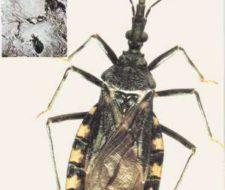 La enfermedad de Chagas