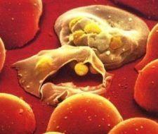 Prueban vacuna contra malaria