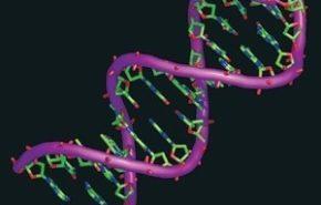 Mapa genético de un gato permitiría conocer más sobre problemas del ser humano