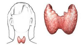 Tiroiditis de Hashimoto, una patología de la glándula tiroides