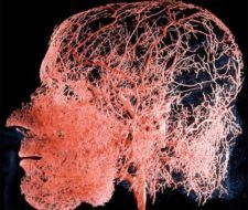 Tumores encefálicos, aspectos generales y epidemiología