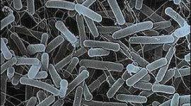 Gastroenteritis por Salmonella