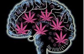 Perfil de consumidor de cannabis o sus derivados
