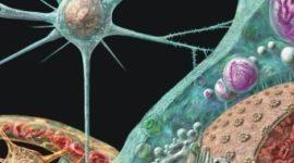 Demencias infecciosas: enfermedades priónicas