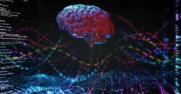 La mielina y nuestras funciones