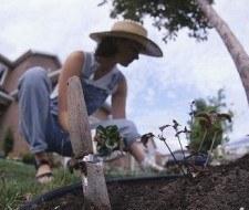 Jardinería, una buena actividad para los adultos mayores