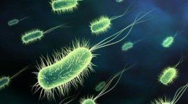 Vivimos con más 200 tipos bacterias distintas en nuestra piel