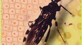 La enfermedad de Chagas hecha raíces en España