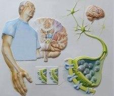Se creó la fundación del Grupo de Enfermos Parkinson del Paraguay (Grenppy)