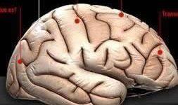 Cerca de 300 patologías de animales tendrían transmisión al hombre