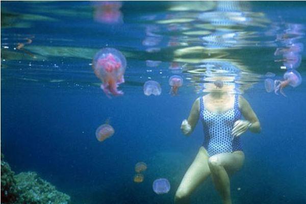 picaduras de medusas
