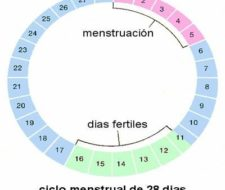 Cambios en temperatura corporal no determinan una posibilidad de embarazo