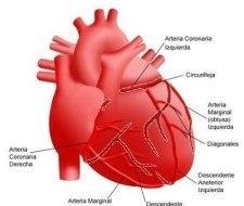 En Israel se ha desarrollado un parche para reparar el músculo cardiaco