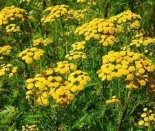 Plantas medicinales, mitos y verdades