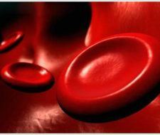 El duro camino de la Hemofilia