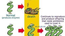 Bacterias que se hacen resistentes a los antibióticos| investigación