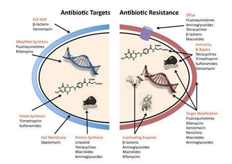 Bacterias que se hacen resistentes a los antibióticos