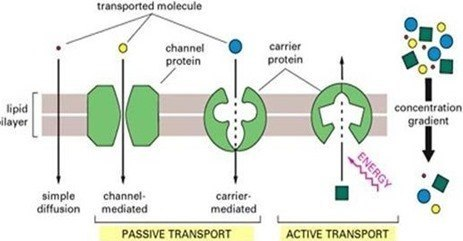 proteinas de transporte