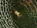 La seda de araña el futuro en la medicina reconstructiva