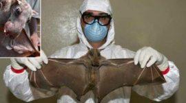 El ébola, ¿por qué aún no tiene cura?