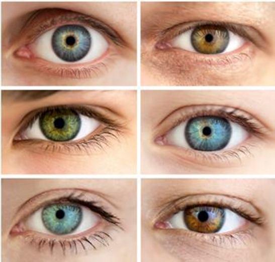 colores-ojos_thumb.jpg