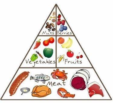 piramide-dieta-paleolitica.jpg