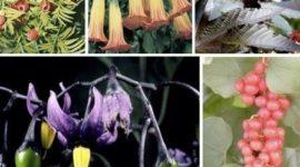 Lista de plantas, setas y semillas venenosas o tóxicas