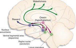 Nueva pastilla para dormir sin efectos secundarios | Dora-22