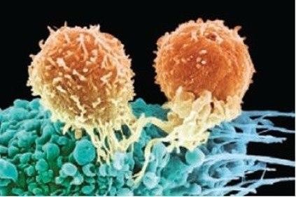 linfocitos-t_thumb.jpg
