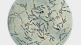 Difteria: cómo se contagia