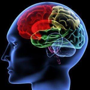 Vitaminas para el cerebro B12