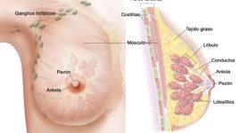 Píldoras Anticonceptivas: ¿qué tipos hay y cuáles son sus beneficios?