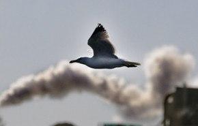 Otro problema a causa de la contaminación