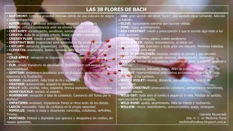 Flores de bach para adelgazar cuales son los derechos