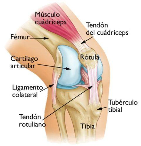 Bursitis de rodilla qu es causas diagn stico y tratamiento blogmedicina - Dolor en la parte interior de la rodilla ...