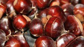 Frutos secos | Importancia en la dieta del deportista