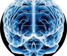 Nuestro cerebro