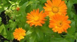 Para que se usan las plantas medicinales