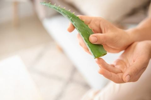 Aloe vera la planta de la inmortalidad embarazo